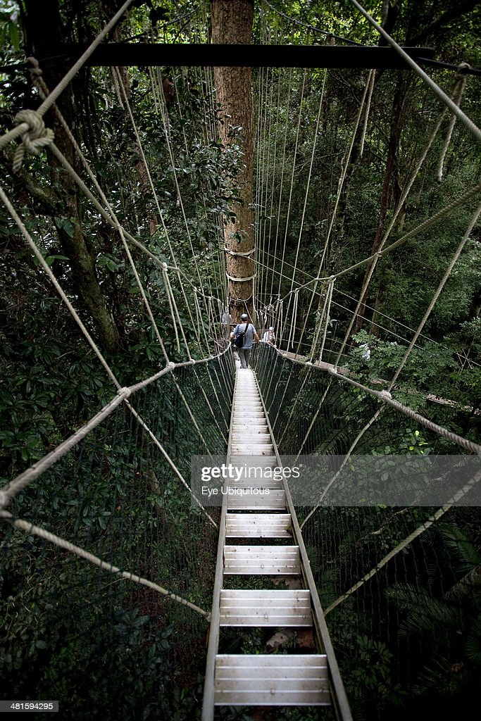 Malaysia Central Pahang Taman Negara People wandering on the canopy walkways of the worlds oldest rainforest & Taman Negara National Park Stock Photos and Pictures | Getty Images