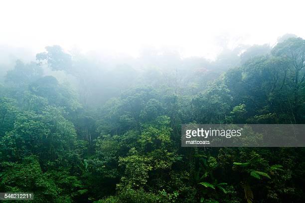 Malaysia, Cloudy Rainforest