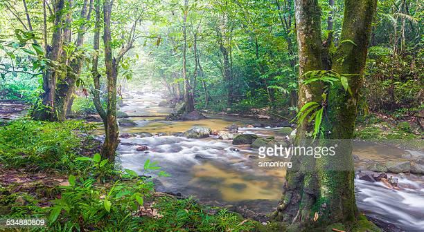 malaysia green rainforest - taman negara national park stock photos and pictures
