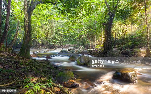 malaysia oldest forest - taman negara national park stock photos and pictures