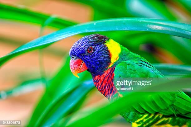 malaysia, pahang, taman negara national park, colorful bird - taman negara national park stock photos and pictures