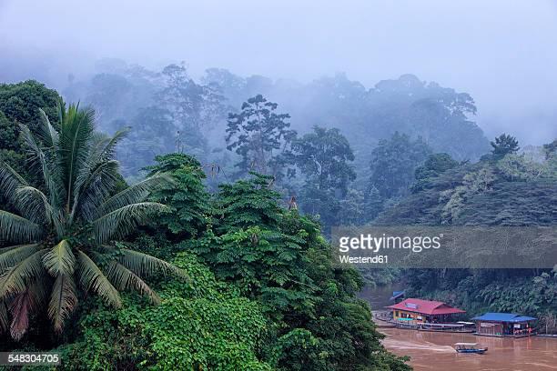 malaysia, pahang, taman negara national park, jungle at sungai tembeling - taman negara national park stock photos and pictures