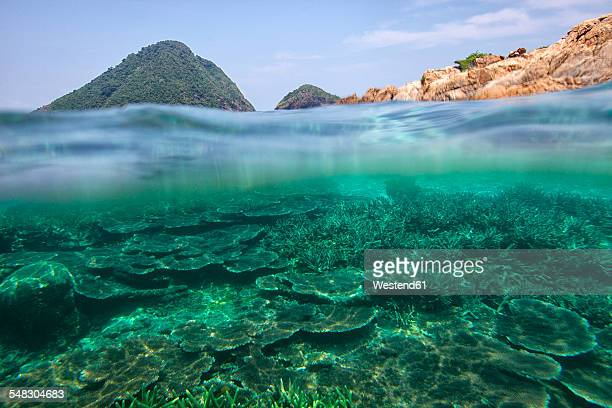 Malaysia, South China Sea, Tioman Island, Coral reef