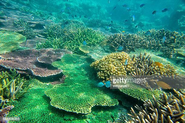 Malaysia, South China Sea, Tioman Island, Coral reef