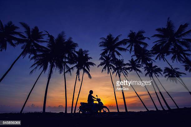 malaysia, terengganu, kuala terengganu, motorcyclist riding under palm trees, silhouetted against dawn sky - terengganu stock pictures, royalty-free photos & images