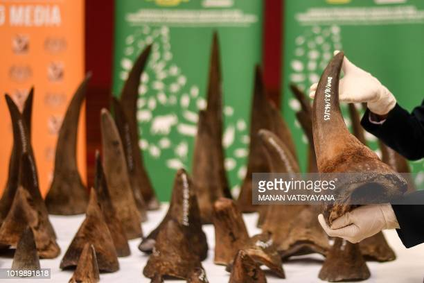 A Malaysian Wildlife official displays seized rhino horns and other animal parts at the Department of Wildlife and National Parks headquarters in...