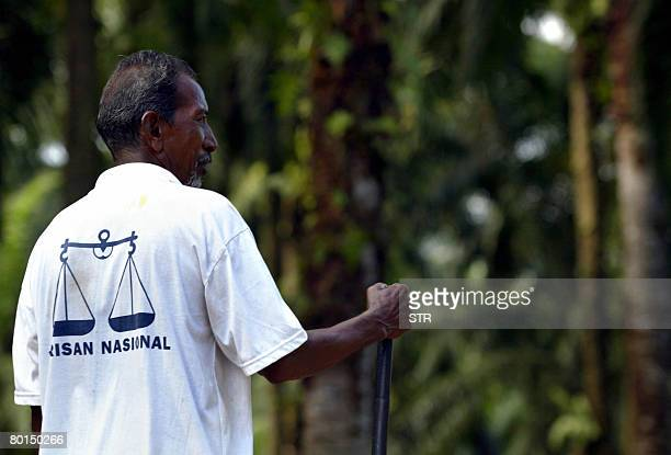 MalaysiavoteIndians by M Jegathesan Ethnic Indian R Ceniyah wears a tshirt carrying the logo of the ruling Barisan Nasional as he tends a herd of...