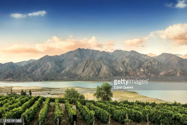 malbec vineyard in the andes mountain range, mendoza province, argentina. - argentina stock pictures, royalty-free photos & images