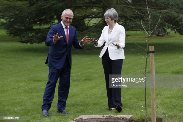 Malcolm Turnbull Australia's prime minister left gestures with Theresa May UK prime minister during the ceremonial planting of an English oak tree at...