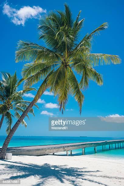Maldives, Ari Atoll, view to palms and jetty at the beach
