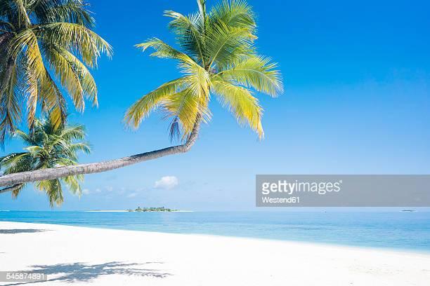 Maldives, Ari Atoll, view to palms and white sandy beach
