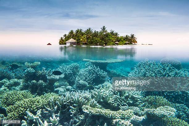 maldives half water - reef stock pictures, royalty-free photos & images