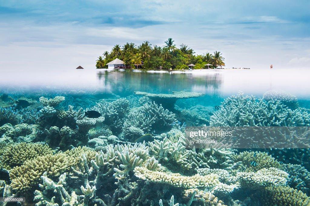 Maldives halfwater : Stock Photo