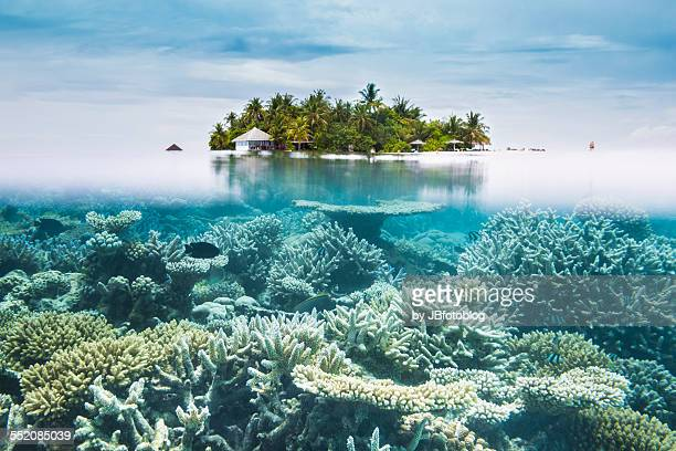 maldives halfwater - great barrier reef stock pictures, royalty-free photos & images