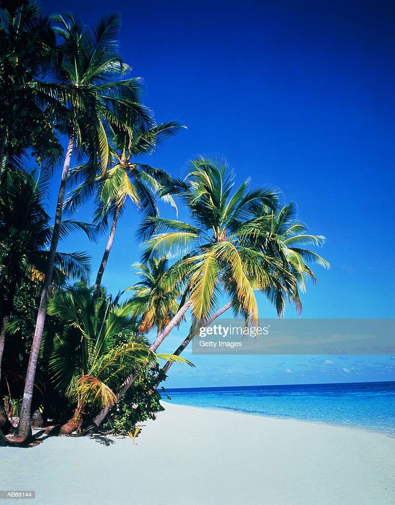 Maldives, Nakachafushi, tropical island beach : Stock Photo