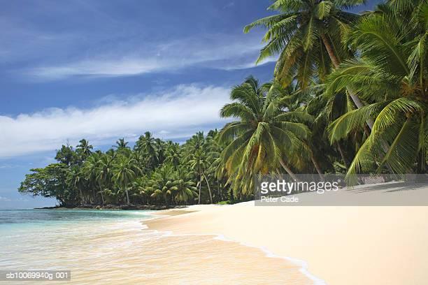 Maldives, Palm trees on tropical beach