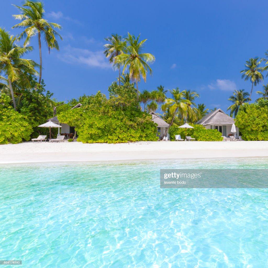 Tropical Island Paradise: Maldives Paradise Beach Perfect Tropical Island Beautiful