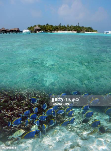 Maldivian Island Above And Underwater