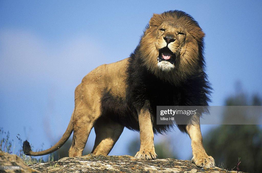 Opciones binarias de león