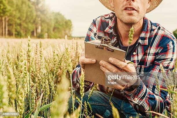 Männliche agrostis Landwirtschaft Arbeiter betrachten