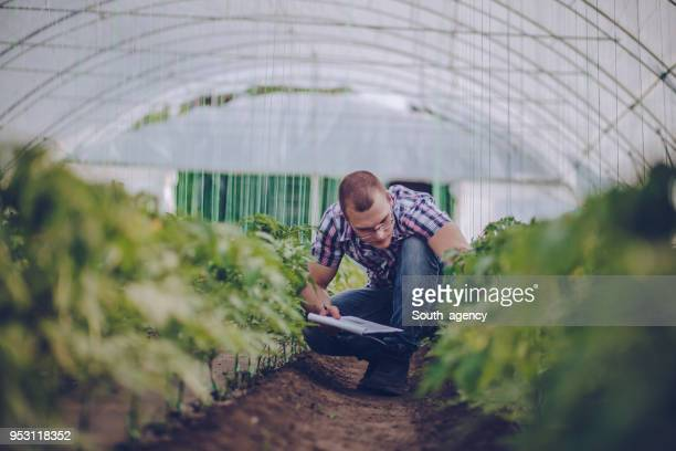 male agronomist in greenhouse - agriculture stock pictures, royalty-free photos & images