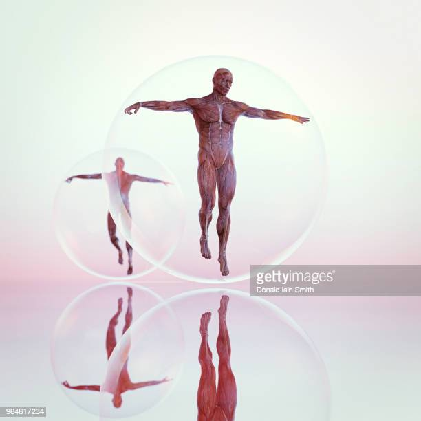 Male anatomical model in floating glass sphere with reflection