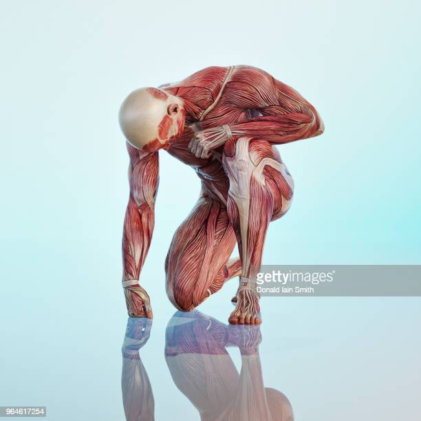 male anatomical model kneeling on ground - anatomical model stock pictures, royalty-free photos & images