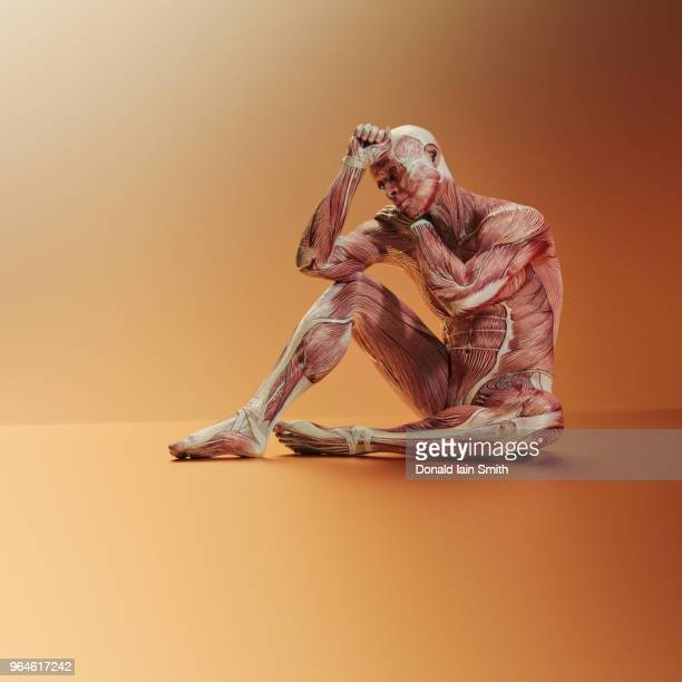 Male anatomical model sitting with head resting on hand
