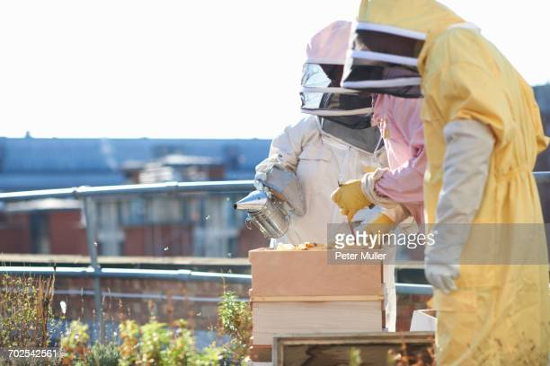 Male and female beekeepers tending trays on city rooftop