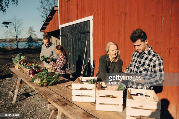 Male and female farmers arranging organic vegetables in crates outside barn