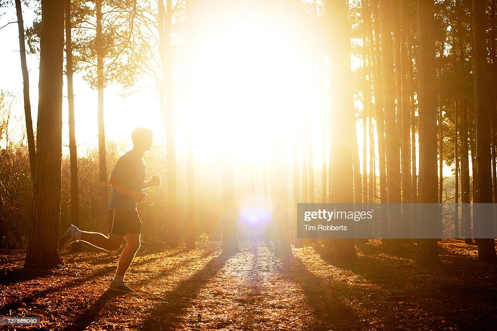 Male athlete running in woods with sun. : Stockfoto
