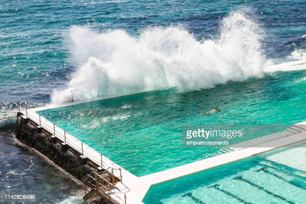 male athlete swimming in seapool - bondi beach stock pictures, royalty-free photos & images