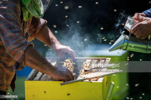 屋外でハニカムを調べる男性養蜂家、 蜂蜜を採取 - 養蜂 ストックフォトと画像