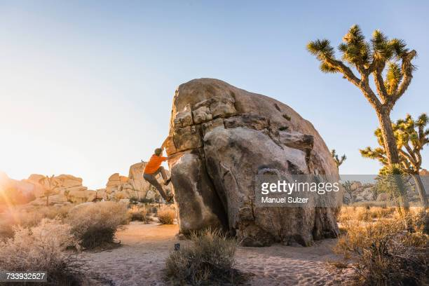 male boulderer moving up boulder in joshua tree national park at dusk, california, usa - joshua tree stock photos and pictures