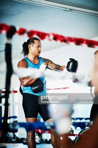 male boxer lacing up gloves during training session in boxing gym - boxing shorts stock pictures, royalty-free photos & images