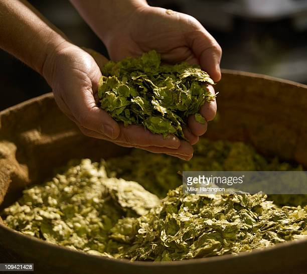 Male Brewer With Handful of Hops