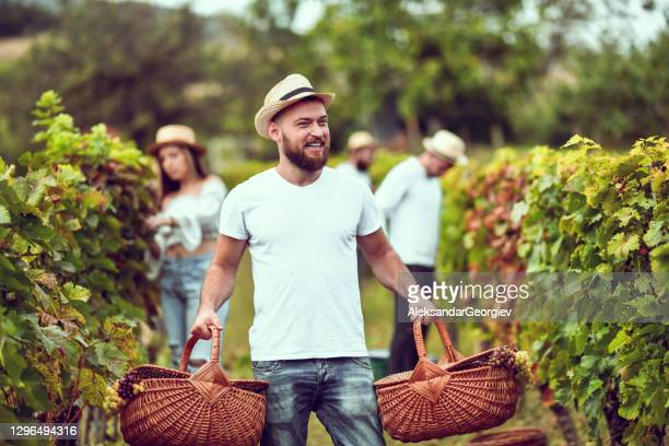 male carrying two baskets of freshly harvested grapes - 18 23 months stock pictures, royalty-free photos & images