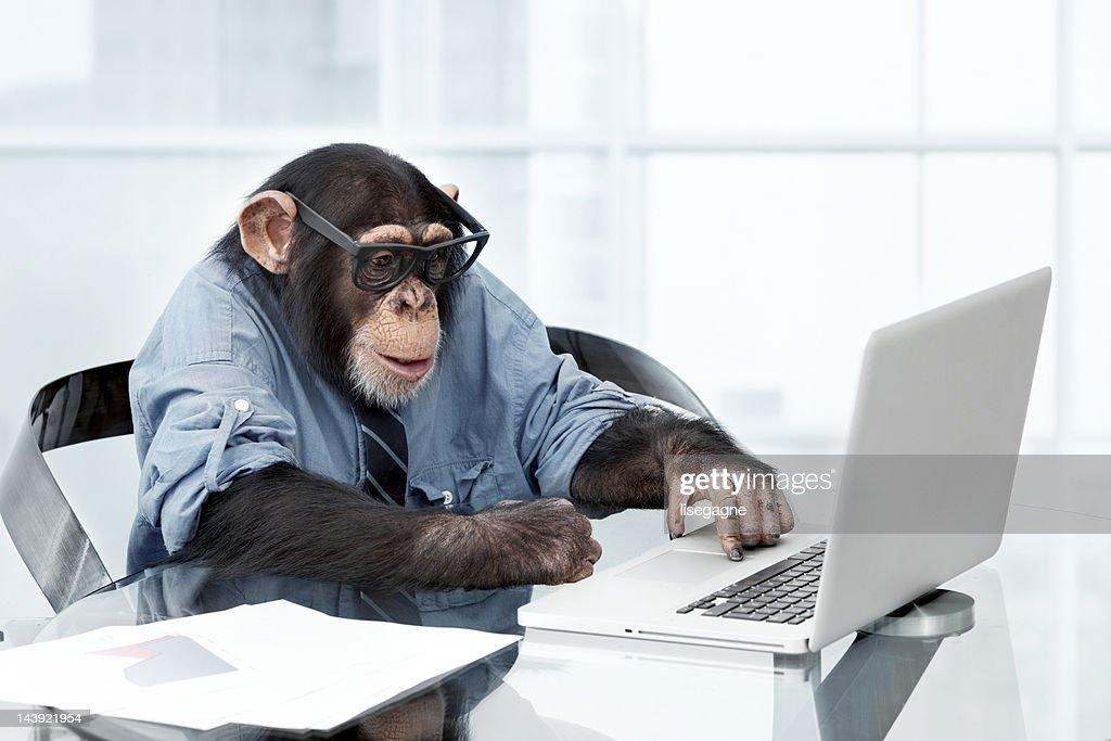 雄チンパンジービジネスの服装 : ストックフォト
