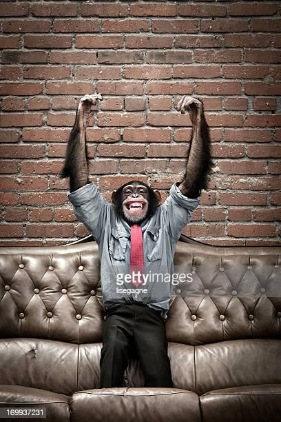 Männliche Schimpansen-Gattung in business-Kleidung