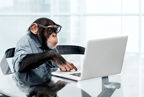 Male chimpanzee in business clothes 169937776