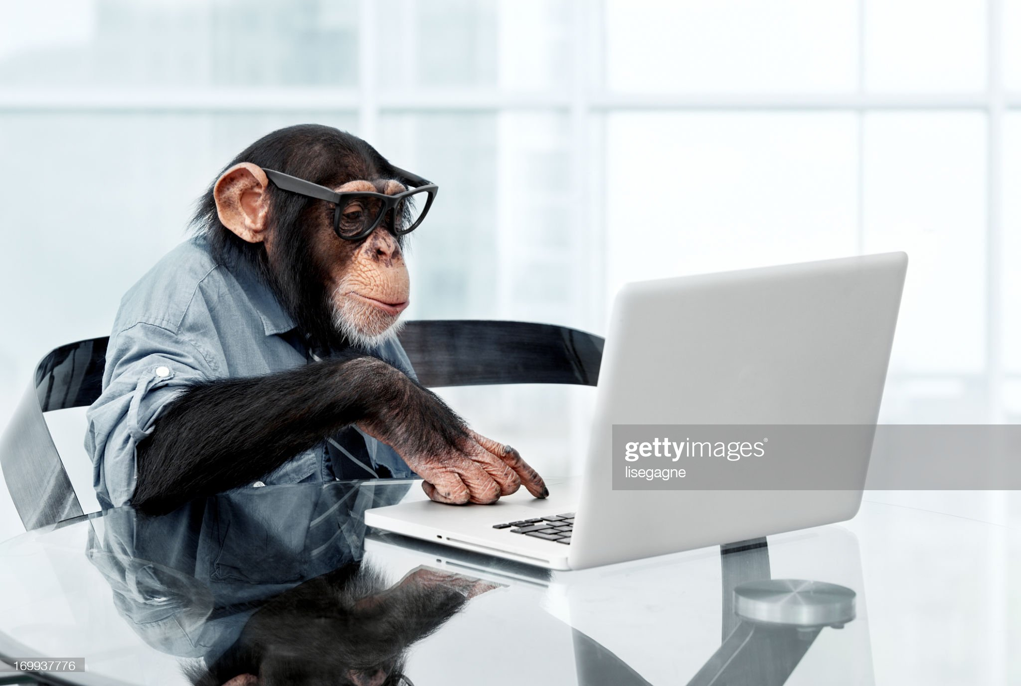 male-chimpanzee-in-business-clothes-picture-id169937776?s=2048x2048