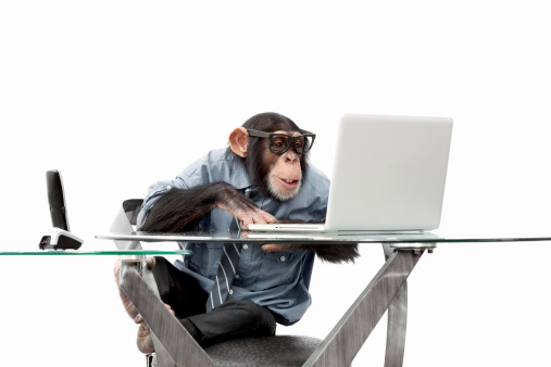Male chimpanzee in business clothes 184915585