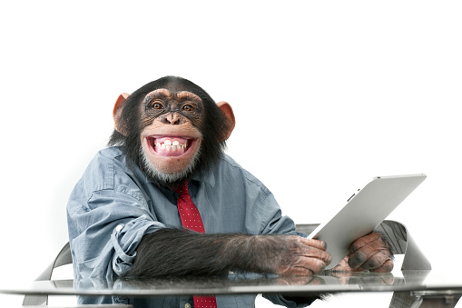 Male chimpanzee in business clothes 184941527