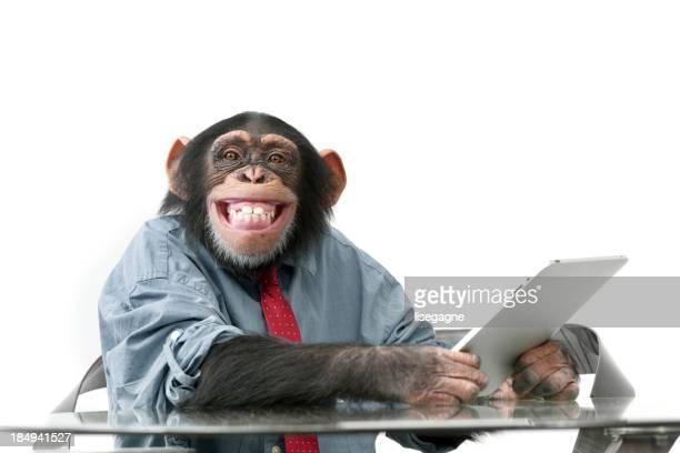 Macho Chimpanzé em Roupas de Negócios