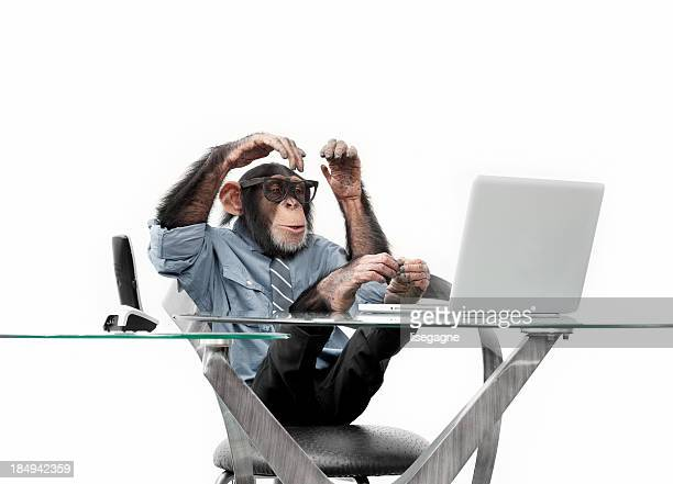 Male chimpanzee in business clothes