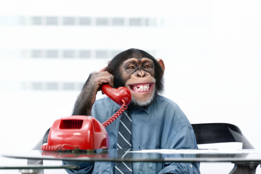 Male chimpanzee in business clothes 184986128
