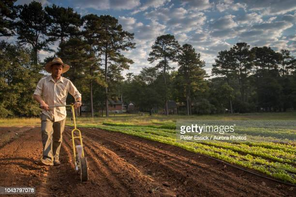male farmer planting vegetables in field - georgia country stock pictures, royalty-free photos & images