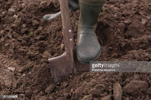 male feet wearing rubber boots digging the ground in the garden bed with an old shovel or spade in the summer garden close up. concept of a garden work. gardening equipment and a tool. front view - condition stock pictures, royalty-free photos & images