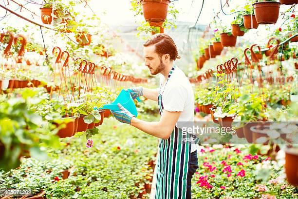 Fleuriste mâle d'arroser des fleurs.