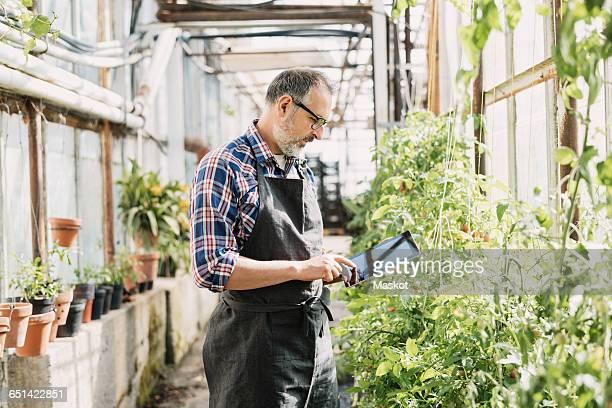 Male gardener using digital tablet in greenhouse